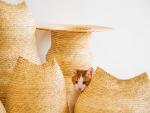 WHECAT – Turning Burned Wheat Straw into Sustainable Pet Supplies
